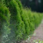 Ako na dokonalý trávnik a dokonalé strihanie živých plotov